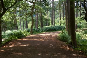 delamere forest uk leisure park